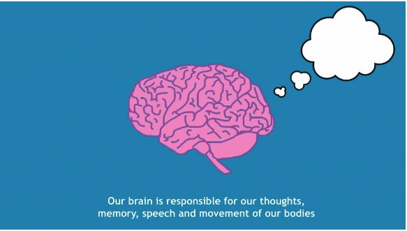 Our brain is responsible for our thoughts, memory, speech and movement of our bodies